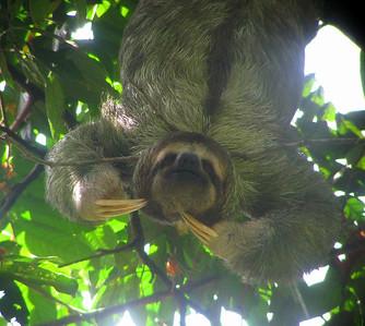 2009 - Costa Rica:  Arenal, Manuel Antonio & Osa Peninsula