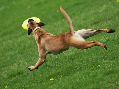 Ohio Disk Dogs Toss and Catch Clinic