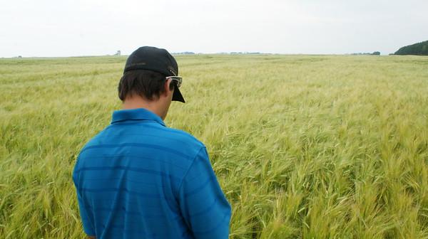 Barley fields etc