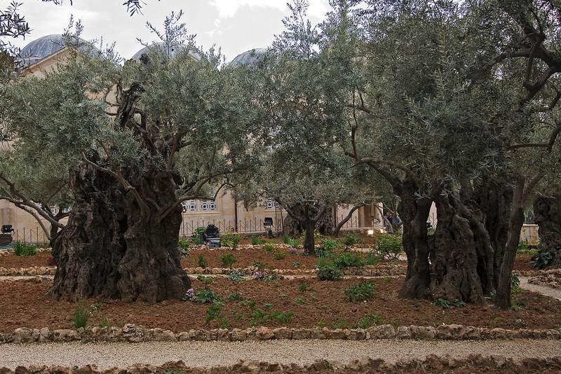 Garden of Gethsemane #3.jpg