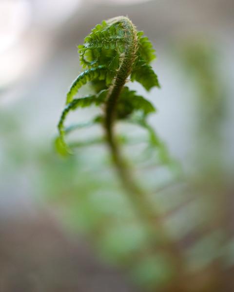 fern-into-blur.jpg