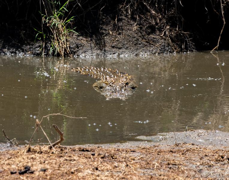 crocodile-104_0219_4503.jpg