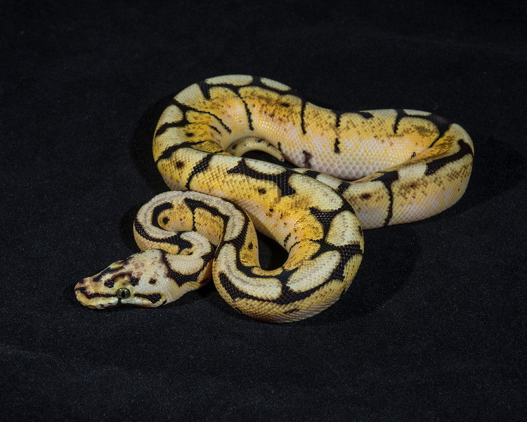 Bumble Bee M0114 (J), $125 (hold for Darlene)
