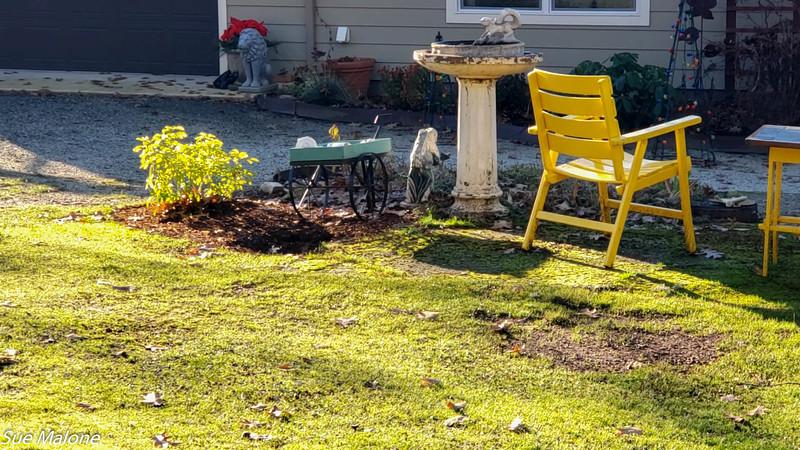 12-23-2020 Sunny Day in the Yard.jpg