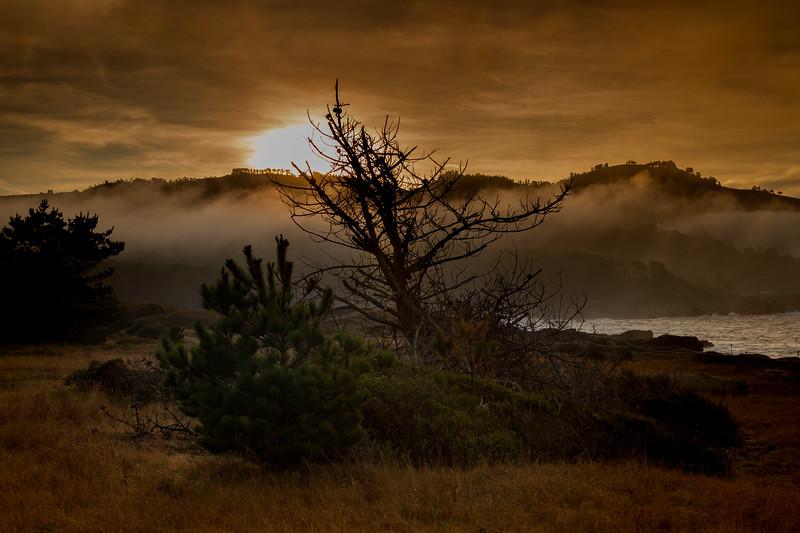 Point Lobos early morning_3357-HDR.jpg