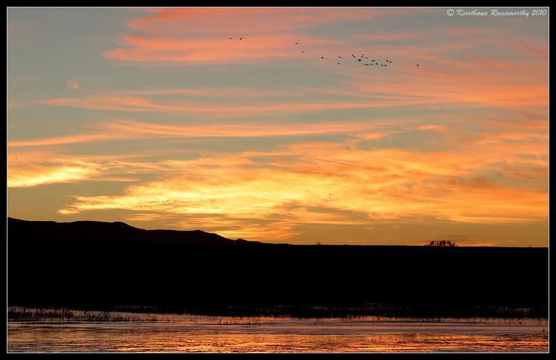 Riot of colours at sunrise, Bosque Del Apache, Socorro, New Mexico, November 2010