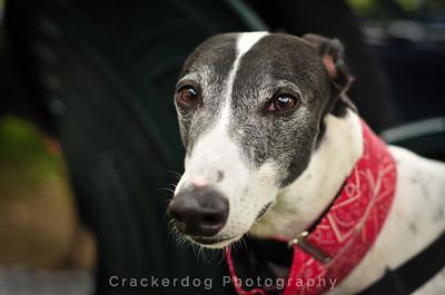 Greyhound Meet-ups