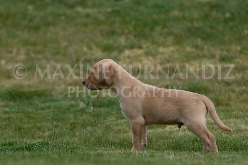 Weika Puppies 24 March 2019-6624.jpg