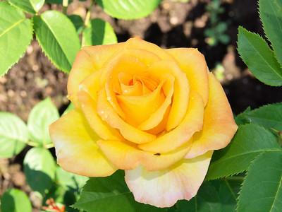 Rose Garden_June 8, 2012