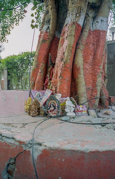 Delhi-kodak800_029.jpg