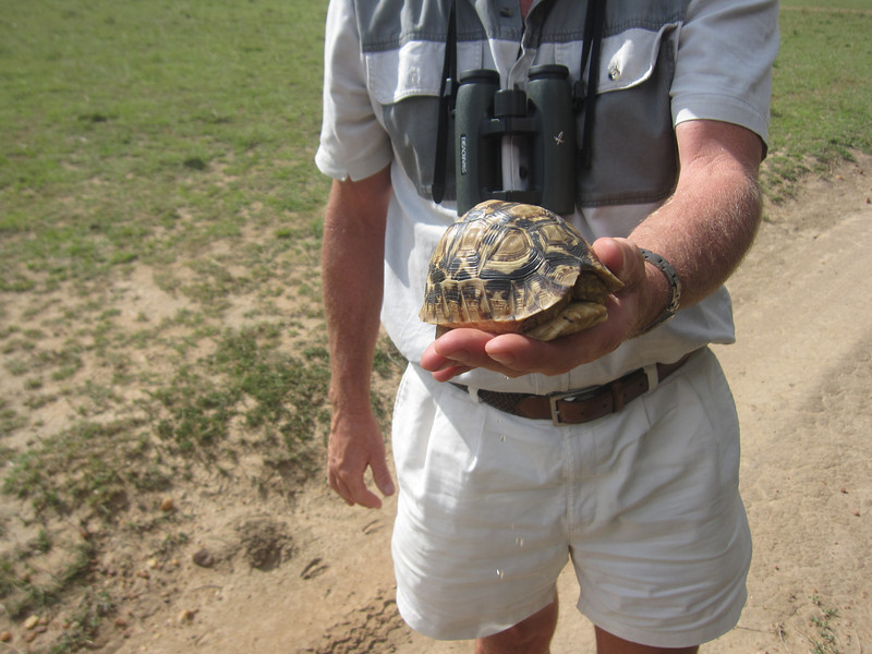 A turtle found on the road, and rescued.