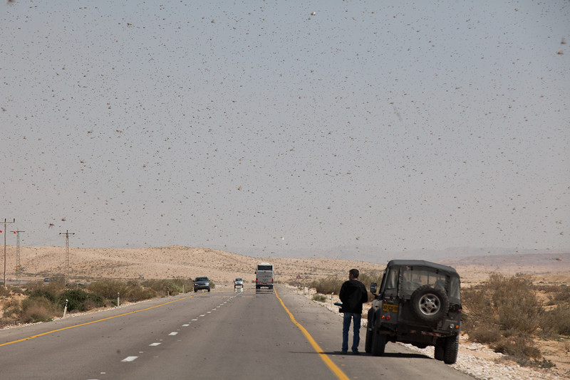 . Israelis stop as they drive through a swarm of locusts arriving over the Negev desert near the Egyptian border on March 6, 2013 in Kmehin, Israel. Egypt and Israel have been swarmed with millions of locusts over the past few days causing wide spread disturbances.  (Photo by Uriel Sinai/Getty Images)