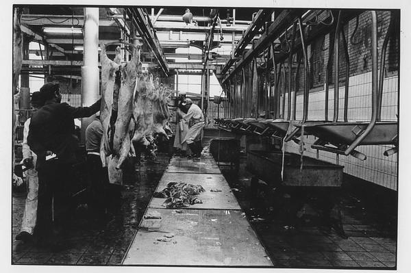 abattoir 1981