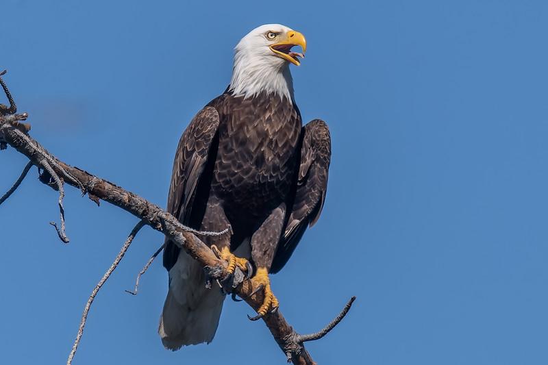 20190421Lake Eagles 4-21-19DSC_9159.jpeg