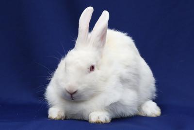 Rabbit Haven - Adoption-10-21-19