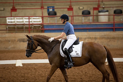 Horse 450