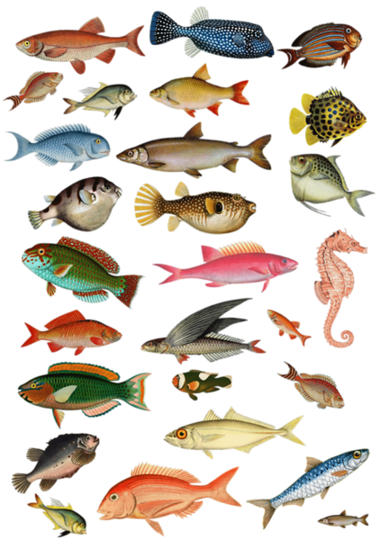 PLANCHEPOISSON2.png