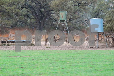 staying-ahead-of-a-deer-population-easier-than-catching-up