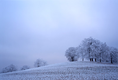 Frost covered trees at dusk