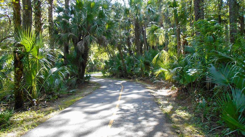 Path between palms