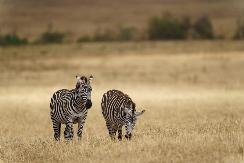 NgorongoroCrater-20181004-1659.jpg