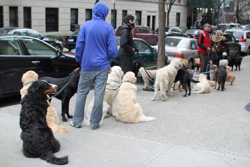 congregation of dog walkers