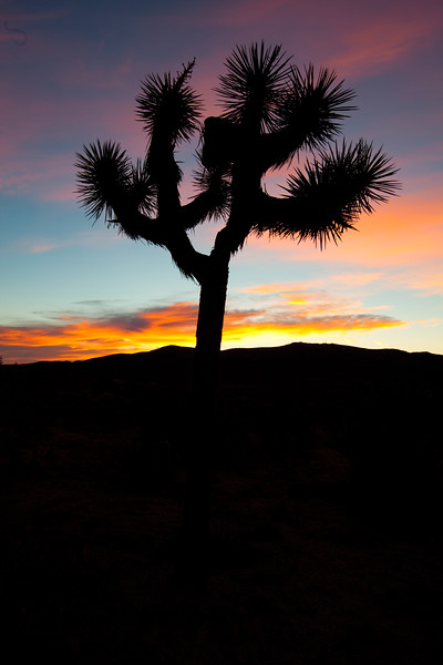 """Joshua Tree Sunrise"", Joshua Tree National Park"