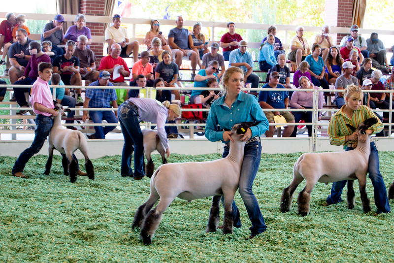 ks_state_fair_2019_lambs-10.jpg