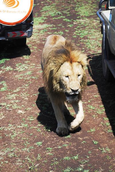 Ngorongoro (102).JPG