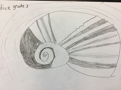 Third Grade Organic Form