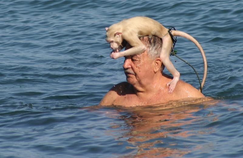 IN058-56-swimming monkey.JPG