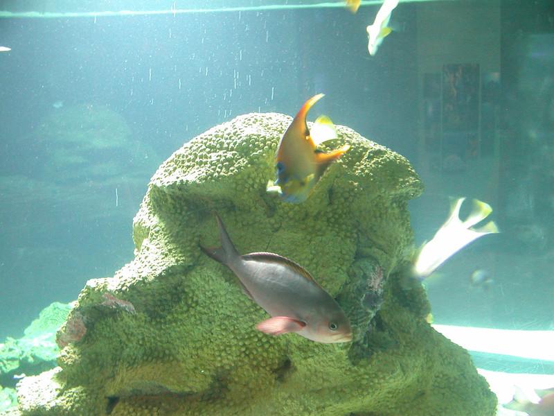 lottafish