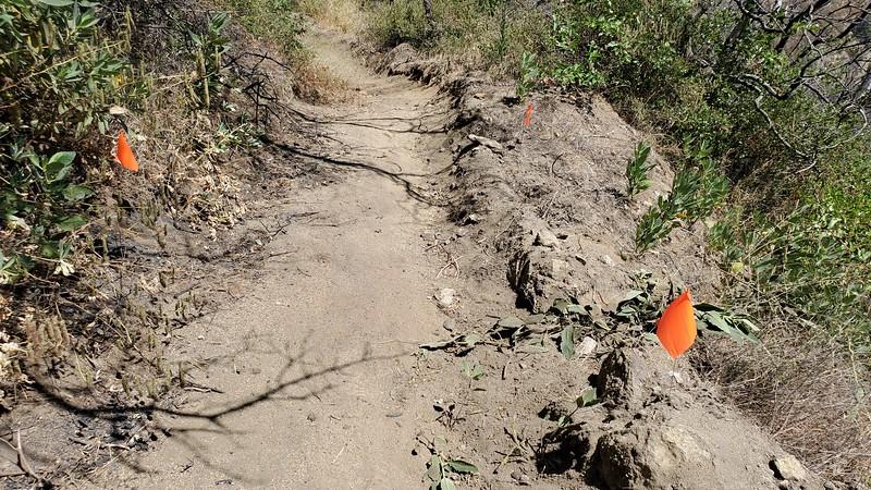 20190810031-Los Pinetos trailwork.jpg