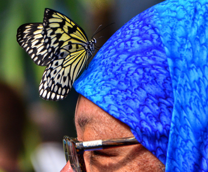 Butterflies 04-17-2011 BQ.JPG