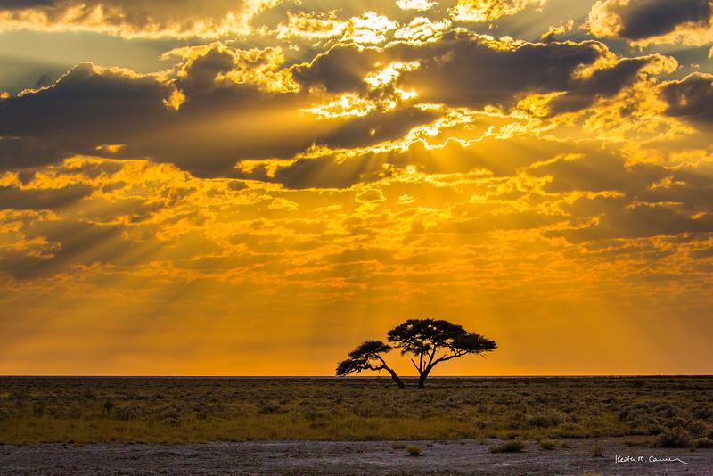 Sunrays in Etosha skies