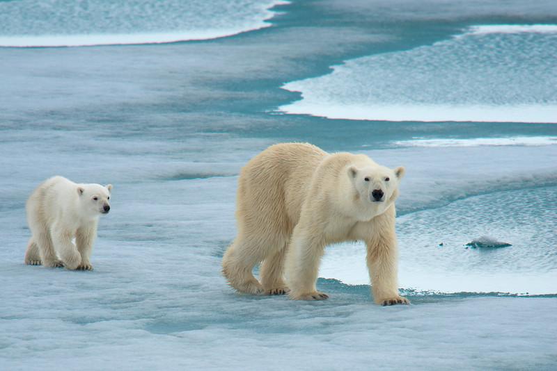 PolarBears_3413.jpg