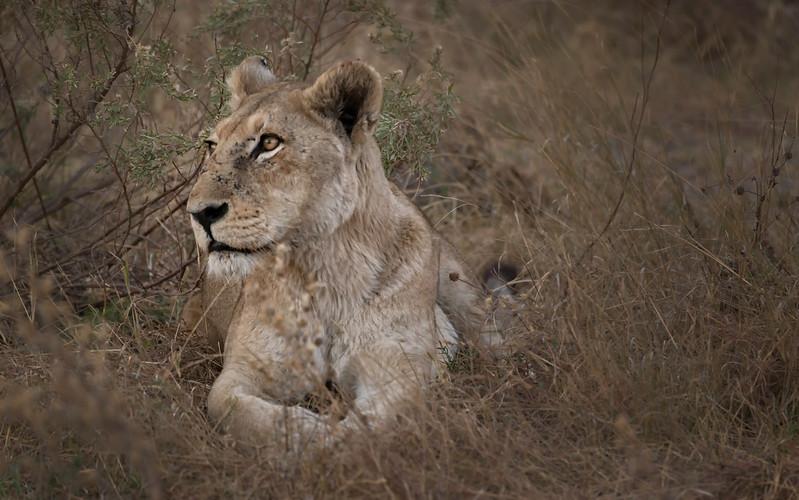 2014-08Aug-Okavango Masters-95-Edit.jpg