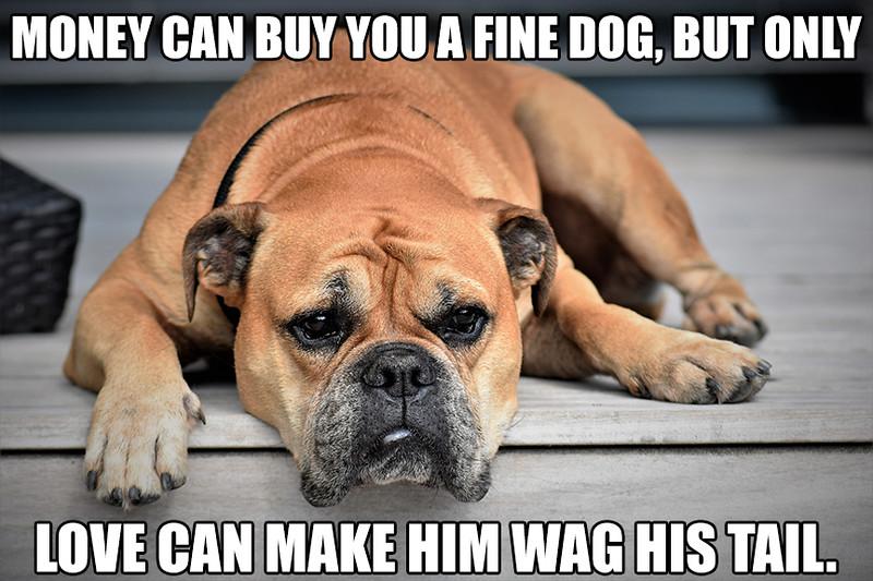 Money-Can-Buy-A-Dog.jpg