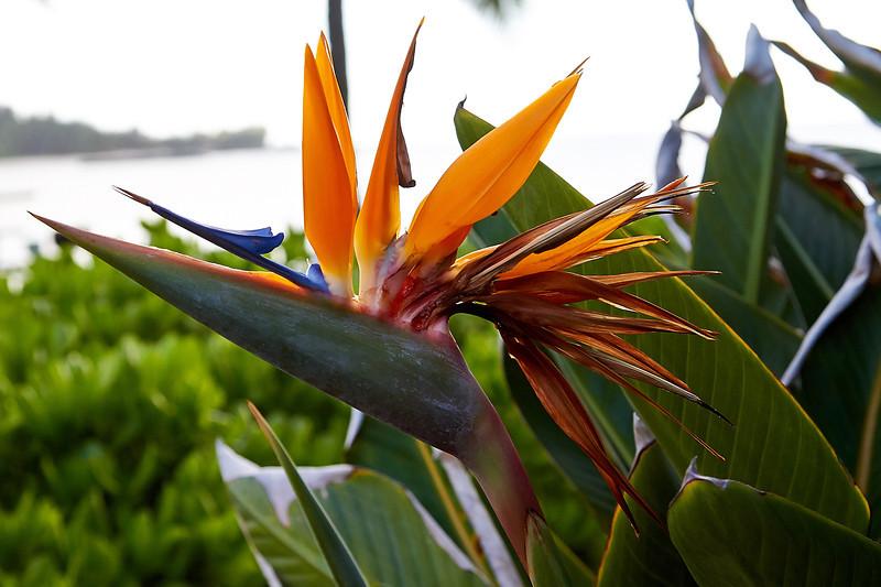 Hawaii-IMG_2334_.jpg