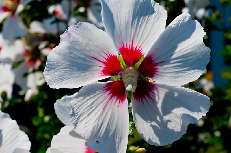 Random pretty flower