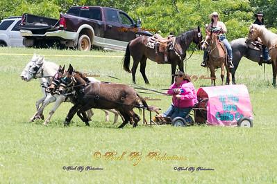 Rock Bottom 2016 4 up Mules