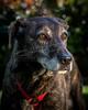 RescuedogsCanon_EOS_5D_Mark_III-2720
