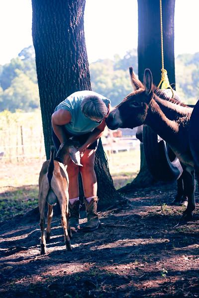 DonkeyKiss.jpg