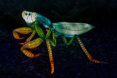 2017 10 David Stowe Botanical Garden Lantern Festival NC