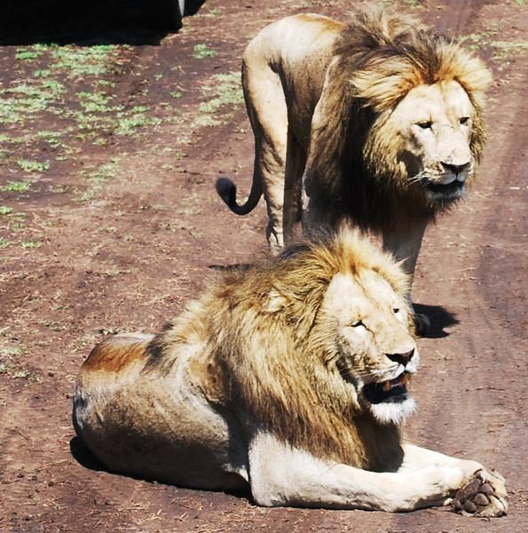 Ngorongoro (136).JPG