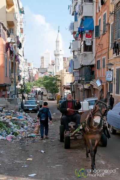 Donkey Cart in Alexandria, Egypt