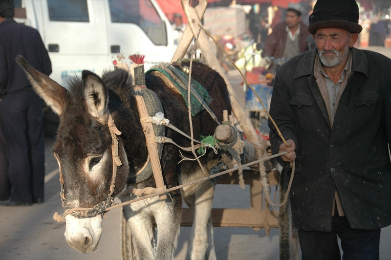 Kashgar Animal Market: Elderly Uighur Man - China