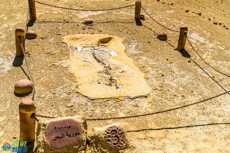 Wadi-El-Hitaan-02354.jpg