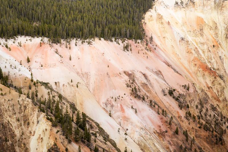 WVWS_Yellowstone-2391.jpg