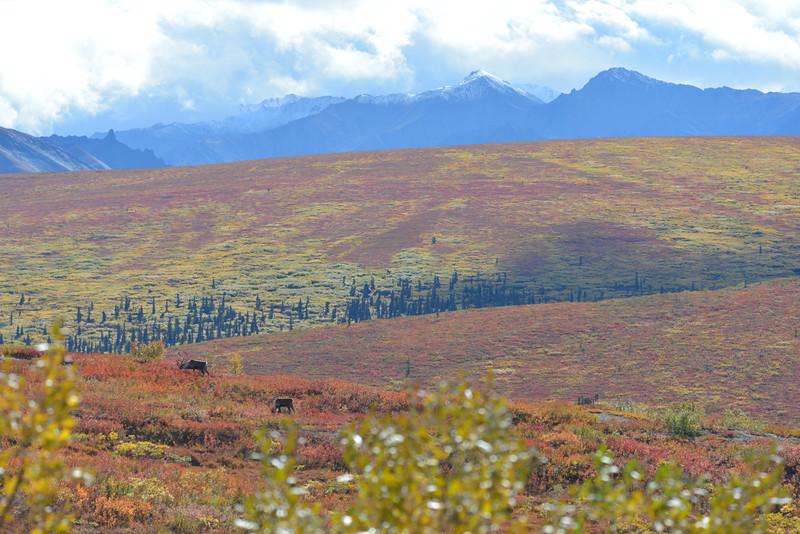 Alaska Fall 2013 - 153.jpg